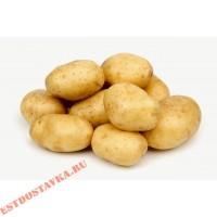 Картофель ранний 1кг
