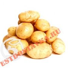 Картофель мытый 2,5кг