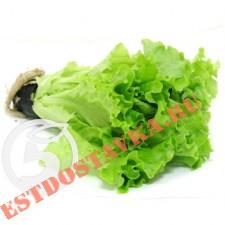 Салат листовой в горшочке 1шт